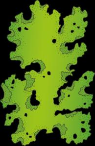 Meersalat skizziert