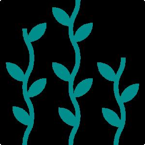 algen 300x300 - Meeresspaghetti - die Algennudeln