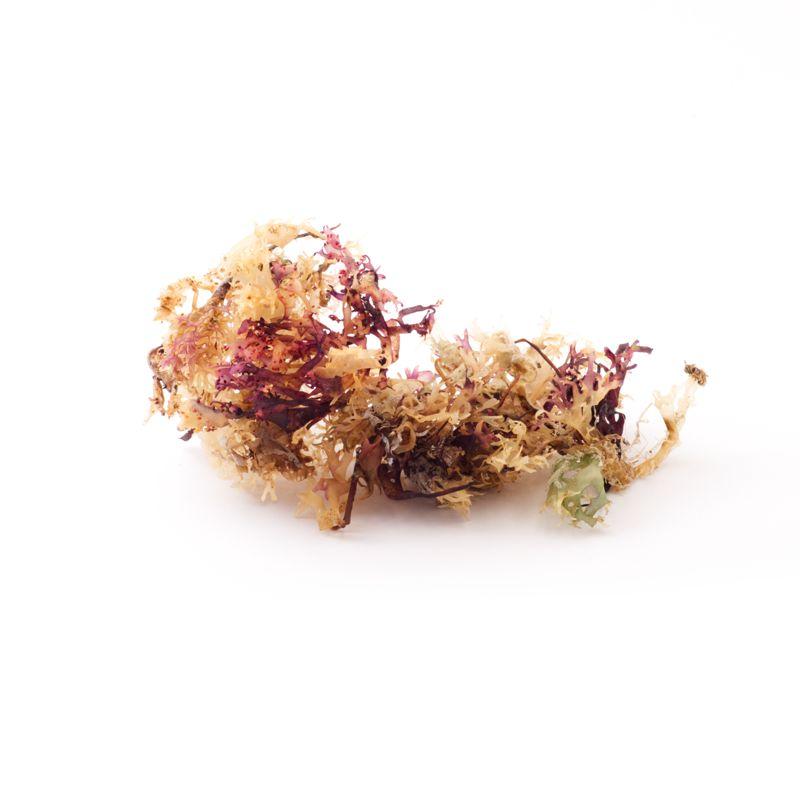 Irisches Moos Blätter