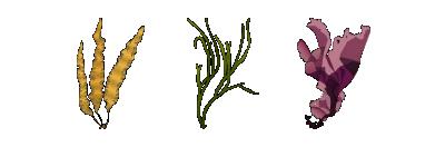 algen-collage-links