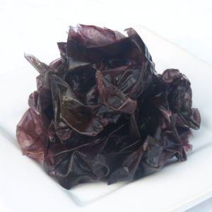 Nori Blätter feucht - Nori - die Alge für Sushi und mehr